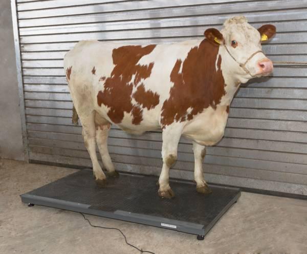 Tierwaage PS3000 bis 1500 kg Kapazität