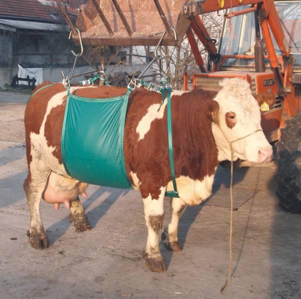 Hebevorrichtung für Kühe bis 1000 kg –Komplettset