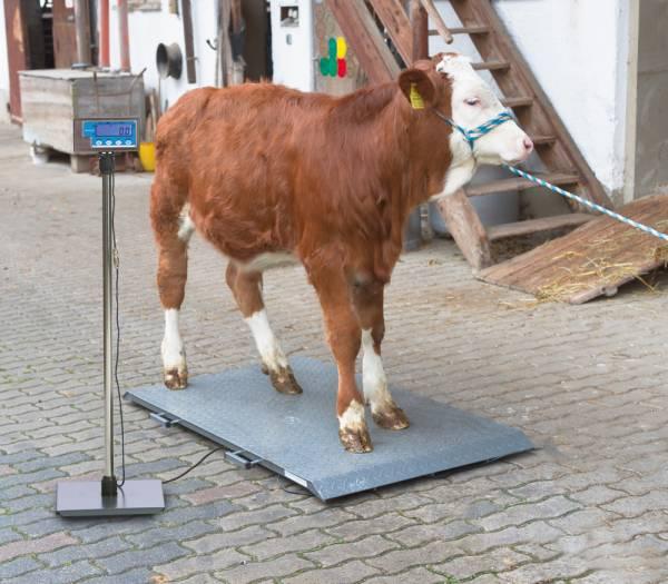 Tierwaage PS2000 bis 1000 kg Kapazität – Ständer für Anzeigeeinheit optional